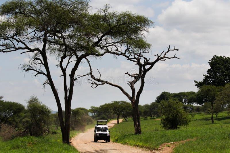 Safari en Afrique images libres de droits