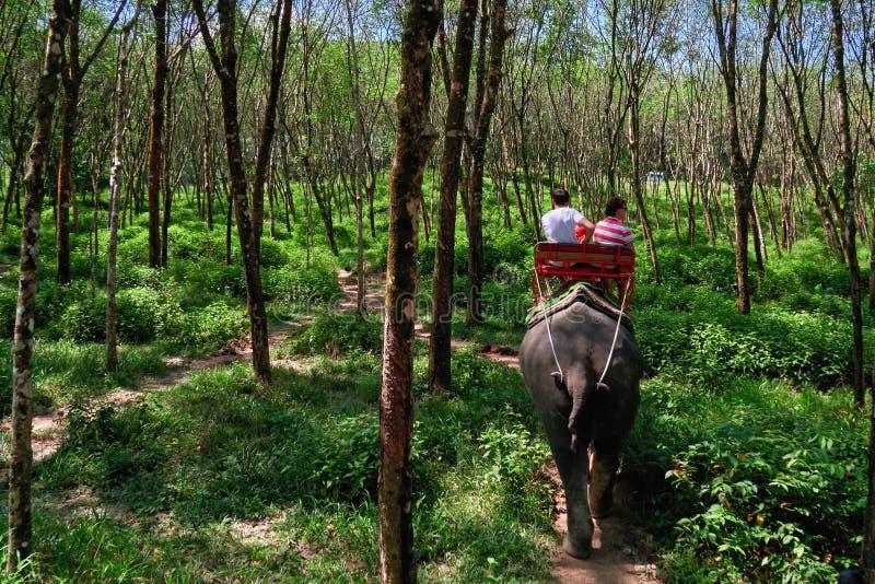 Safari en elefantes en la arboleda de Brasiliensis de la Hevea El elefante está llevando a un par de personas jovenes Visión post imagen de archivo libre de regalías