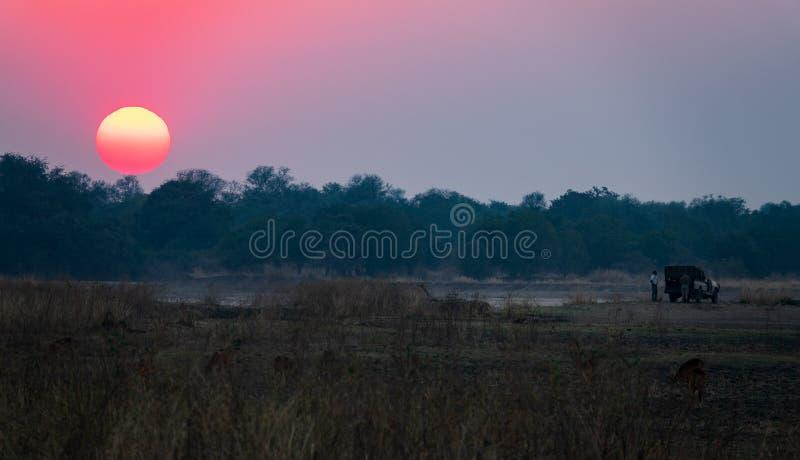 Safari en voiture au coucher du soleil en Afrique photo stock