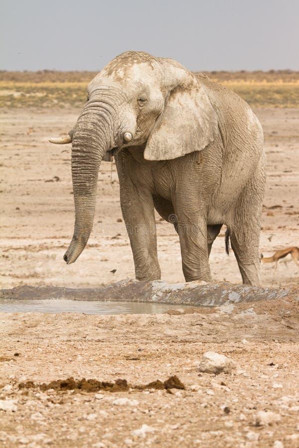 Safari Etosha immagini stock libere da diritti