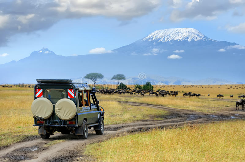 Safari game drive with the wildebeest. Masai mara reserve in Kenya, Africa royalty free stock photography