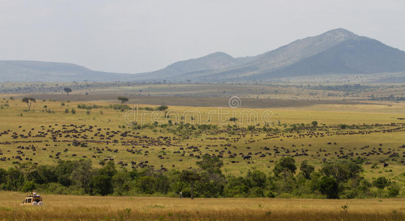 Download Safari During The Great Migration Stock Photo - Image: 22563274
