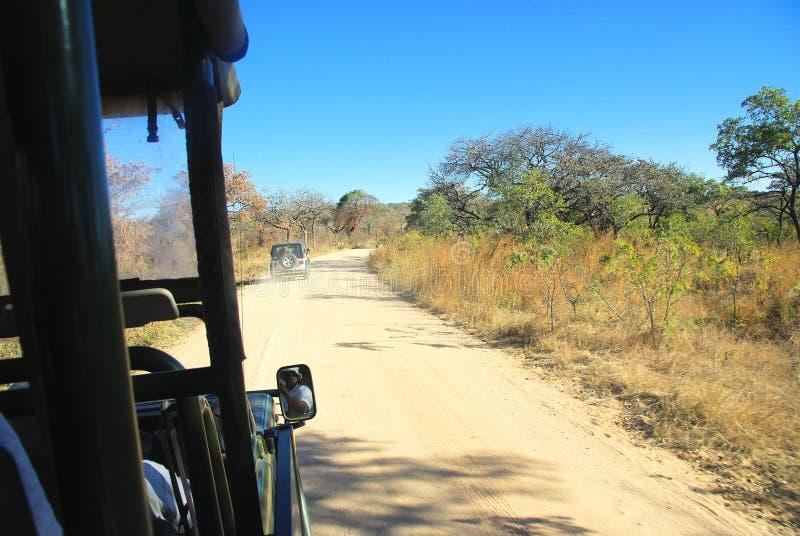 Safari i Sydafrika arkivfoton
