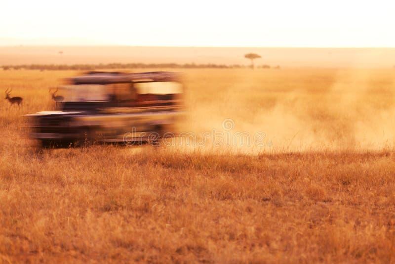 Safari Jeep Driving fotografie stock