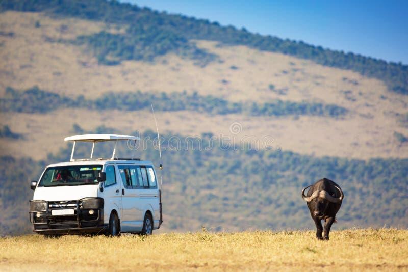 Safari-konceptet Safari bil med buffalo bison i afrikansk savannah Masai Mara nationalpark, Kenya royaltyfri bild