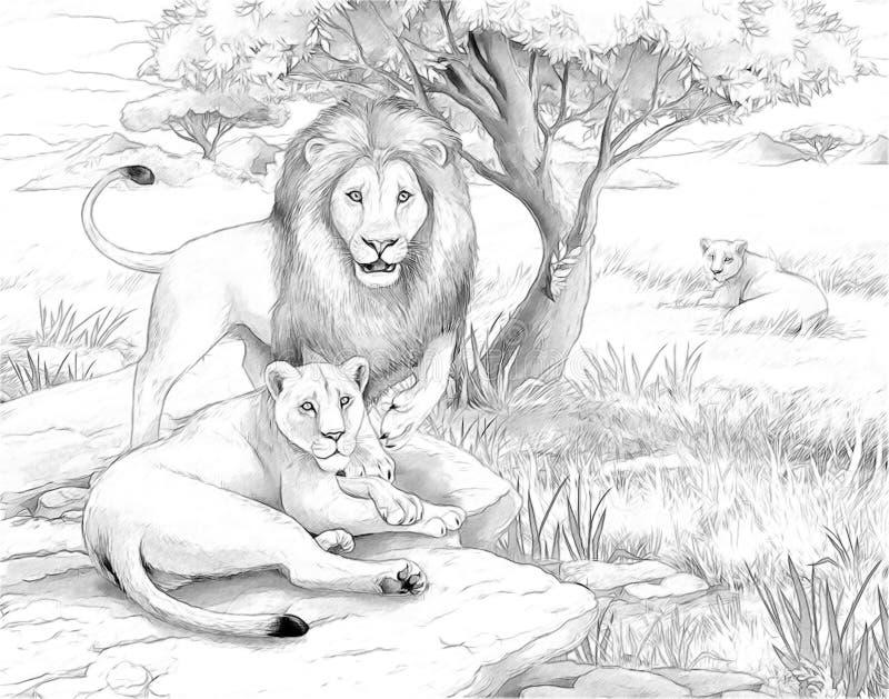 Safari - Löwen lizenzfreie abbildung