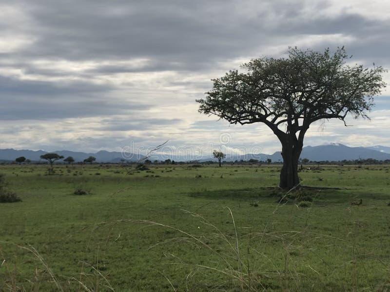 Safari Landscape imagen de archivo libre de regalías