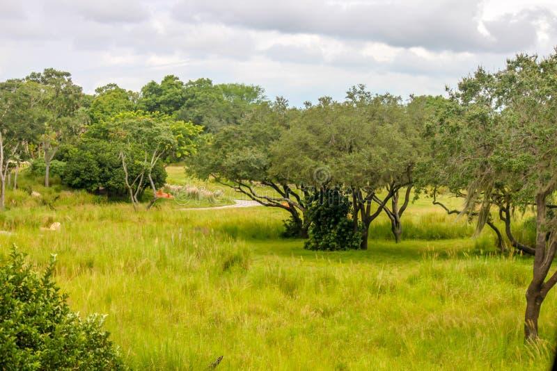 Safari Landscape de la sabana fotos de archivo libres de regalías