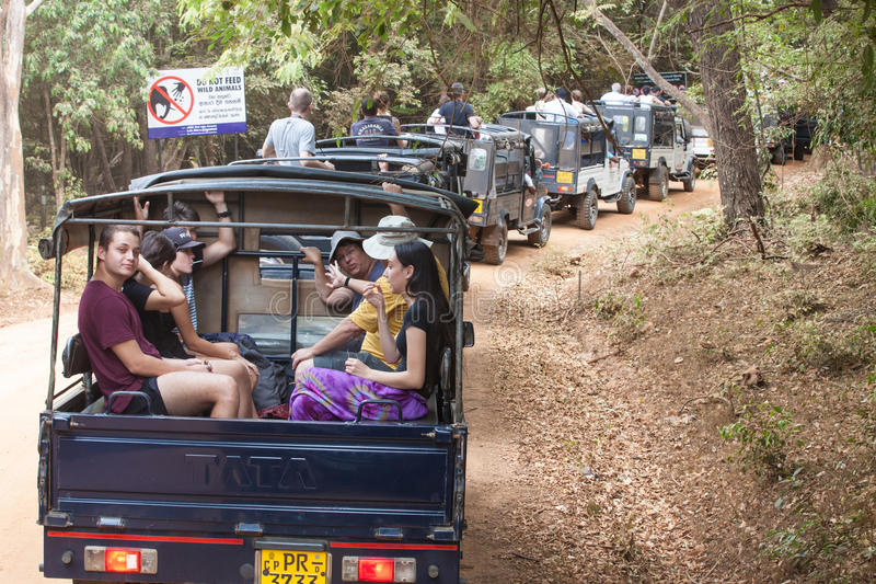 Safari. Many off-road jeep with visitors. Minneriya. Sri Lanka. Minneriya National Park. Many jeeps carrying many tourists visiting the famous national park of stock photography