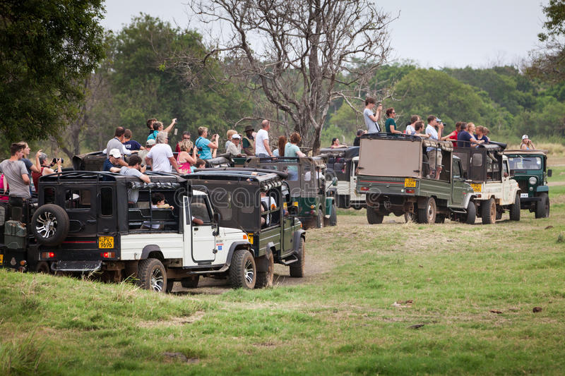 Safari. Many off-road jeeps with visitors. Minneriya. Sri Lanka. Minneriya National Park. Many jeeps carrying many tourists visiting the famous national park of stock photos