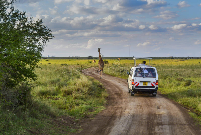Safari in Nationalpark Nairobis lizenzfreies stockfoto