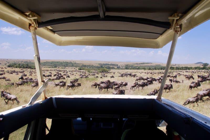 Safari nel Kenia immagine stock