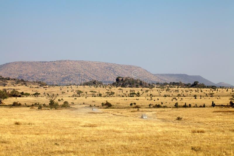 Safari nella savanna africana fotografia stock libera da diritti