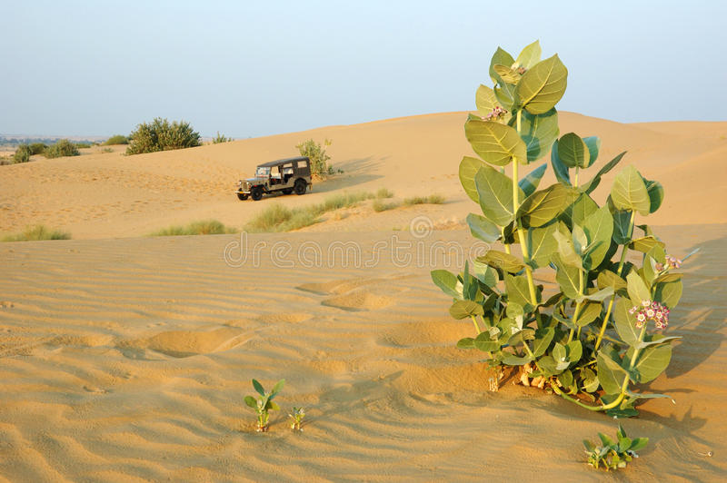 Safari no deserto de Thar, Rajasthan de Jeep, India imagens de stock royalty free