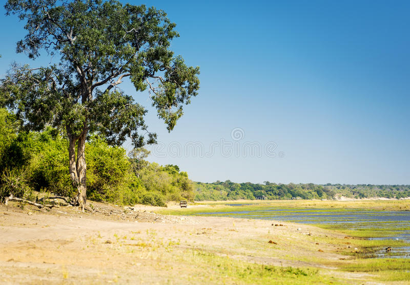 Safari no parque nacional de Chobe fotografia de stock royalty free