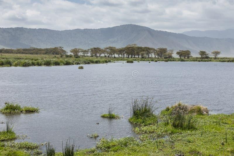 Safari in Nogorongoro-Krater royalty-vrije stock fotografie