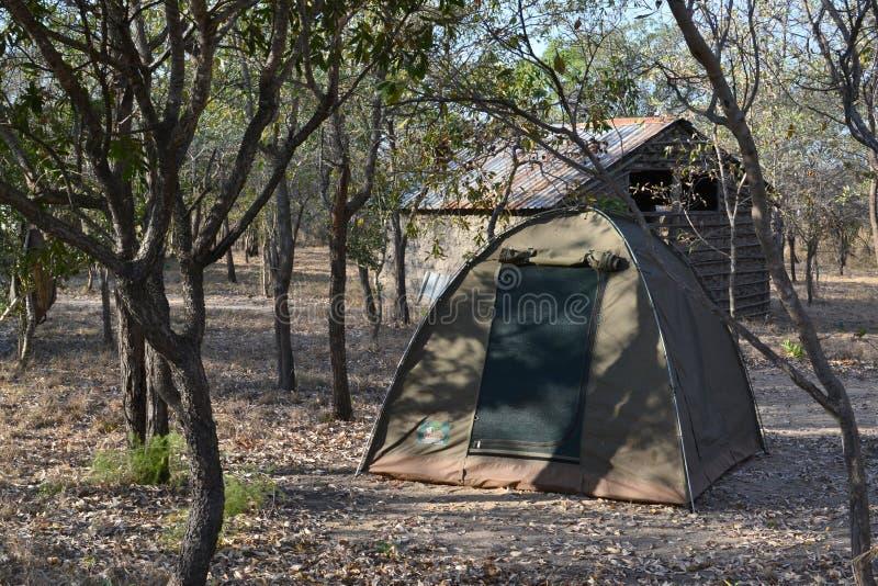 Safari obozowy namiot obraz stock
