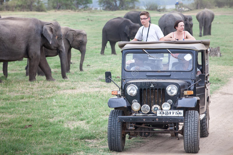 Safari. Off-road jeep with visitors. Minneriya. Sri Lanka. Minneriya National Park. A jeep with over the visitors observing the wild elephants of famous royalty free stock images
