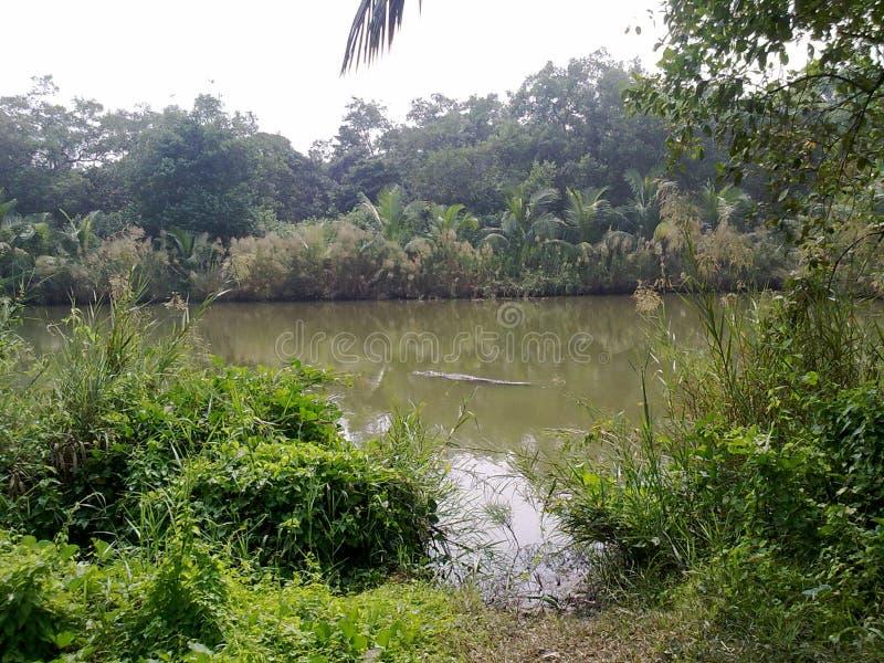 Safari Park de Sunderbans, Bangladesh images stock