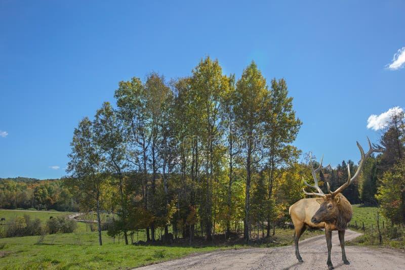 Safari Park entre Montreal e Ottawa imagem de stock royalty free