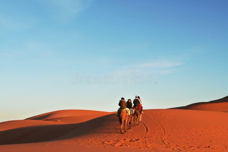 Safari in Sahara. Camels caravan in Sahara desert stock photos