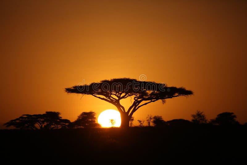 Safari selvaggio Tanzania Ruanda Botswana Kenya della savana di pictrures africani di estate fotografia stock
