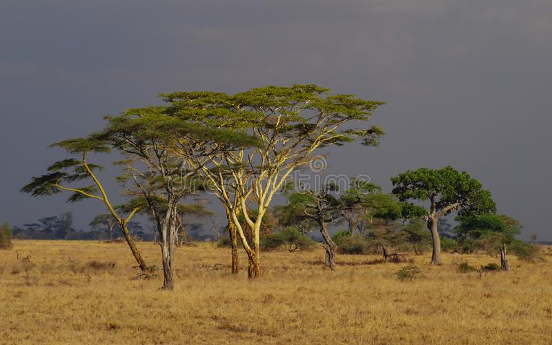 Safari in the Serengeti National Park, Tanzania, Africa. Beautiful African Landscape sunset. Wide Savannah and beautiful plains royalty free stock image