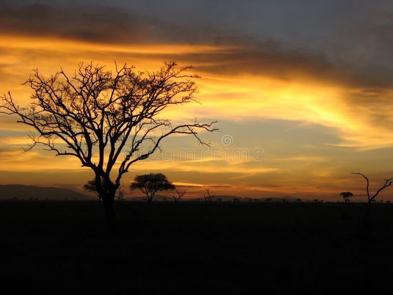Safari Sunset lizenzfreie stockbilder