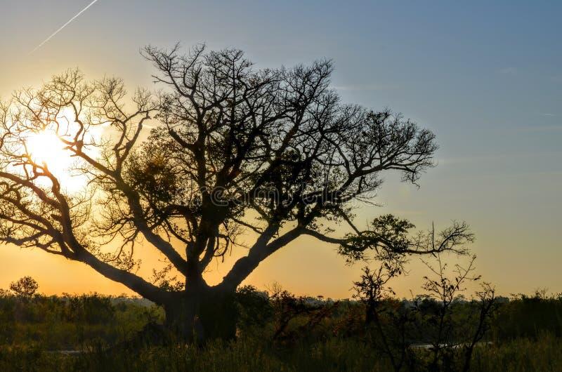 Safari Sunset image stock