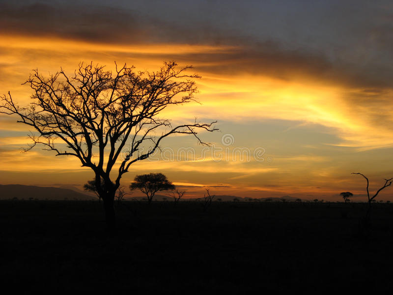 Safari Sunset royalty free stock images