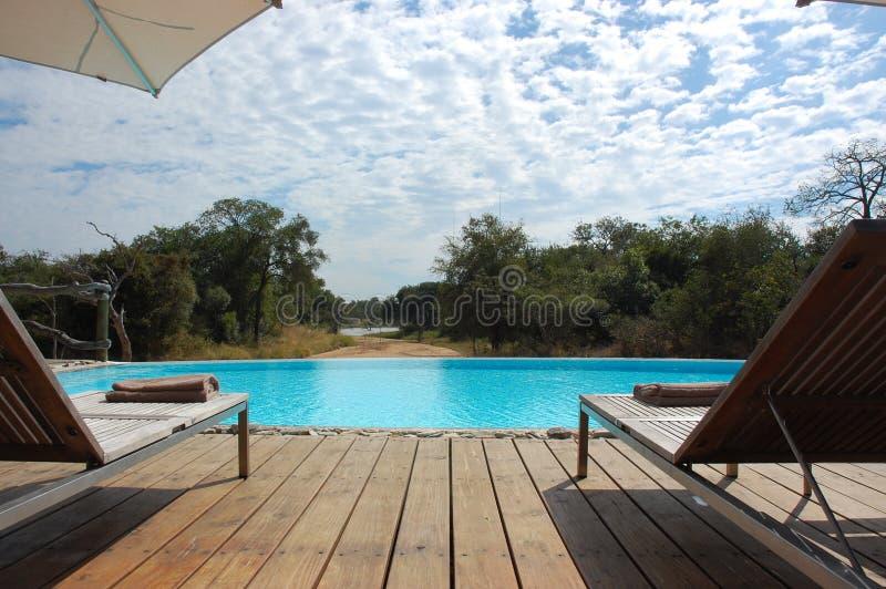 Safari-Swimmingpool lizenzfreies stockbild