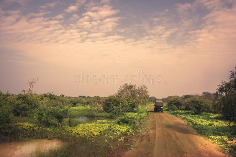 Safari travel tour on suv car in Yala national park reserve wetlands in Sri Lanka in vibrant orange pink purple colors. Safari travel tour on suv car in Yala royalty free stock image