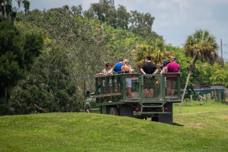 Safari truck moves away from giraffes and zebras area at Busch Gardens 3 royalty free stock photography