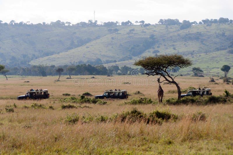 Safari Trucks Viewing Giraffe