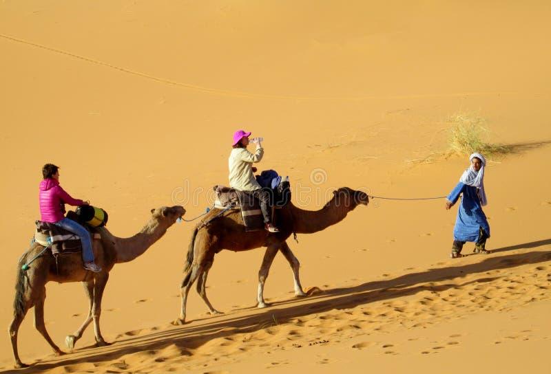 Safari turístico en camellos en desierto fotos de archivo
