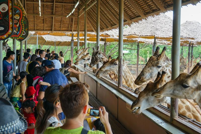 Safari World Bangkok Thaland - 7 Juli 2018: Ungar och vuxna människor är arkivbilder