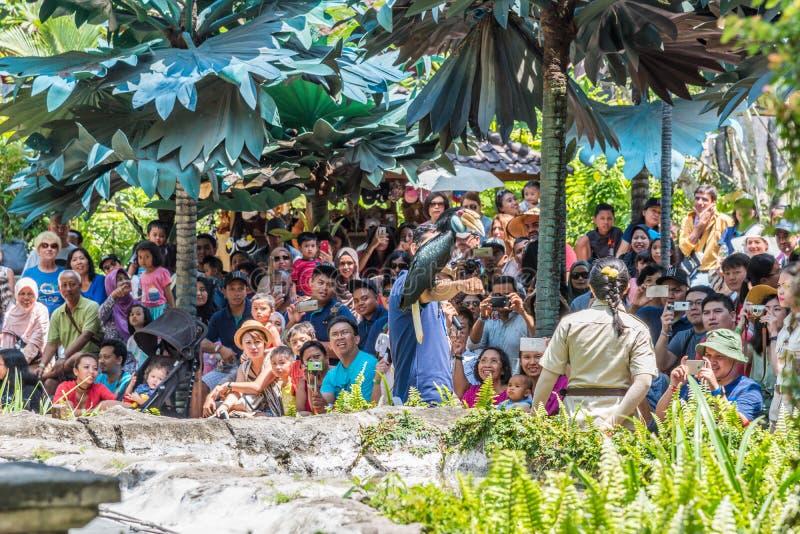 Safari y Marine Park de Bali en la demostración animal con el orangután, la serpiente y otras foto de archivo libre de regalías