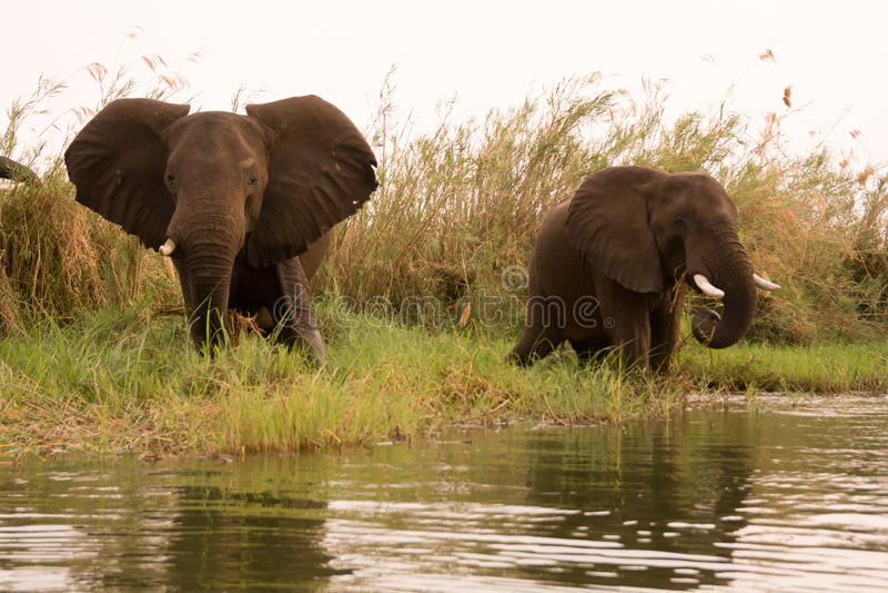 Download Safari Zimbabwe stock photo. Image of game, clouds, african - 18389040