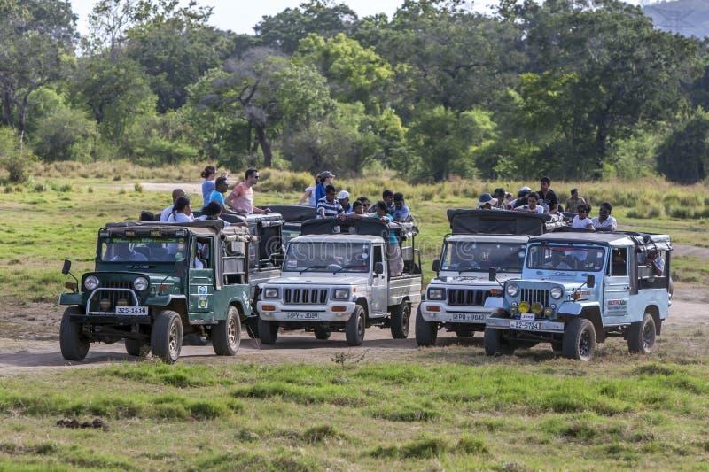 Safarijeepar på den Minneriya nationalparken royaltyfria bilder