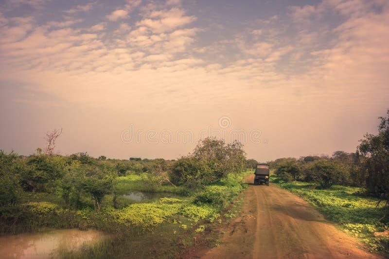 Safariloppet turnerar på suvbilen i våtmarker för den Yala nationalparkreserven i Sri Lanka i vibrerande orange rosa purpurfärgad royaltyfri bild