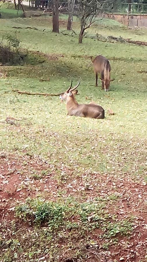 Safariweg lizenzfreies stockbild