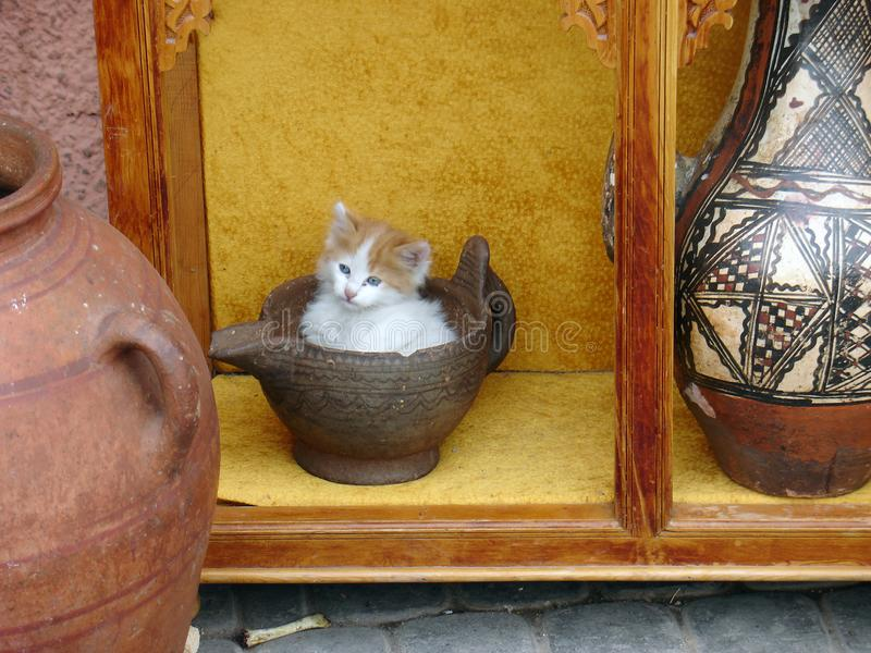 Safe Place for Kitten on Djemaa El-fna Square in Marrakesh stock photography