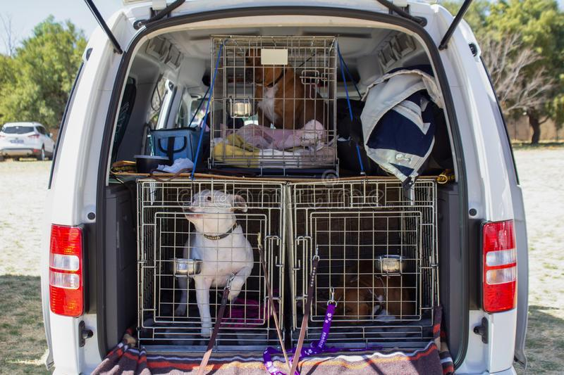 Safe transport of pets - dogs in transport cages in a car royalty free stock photo