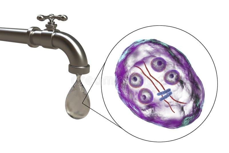 Giardia in tap water