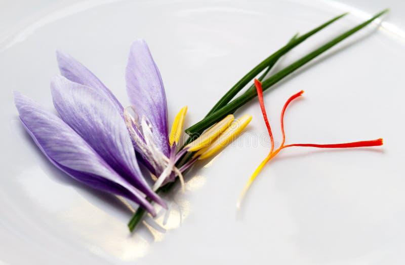 Saffron Flower Parts. Saffron crocus flower parts after harvesting for expensive red saffron stigmas royalty free stock image