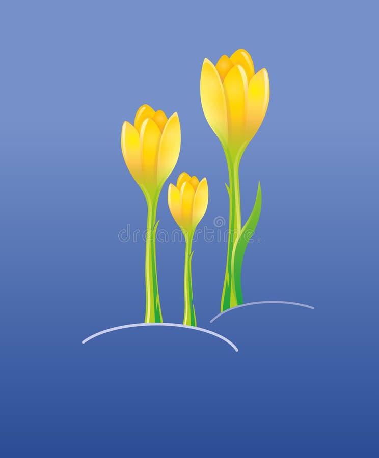 Saffron flowers stock image
