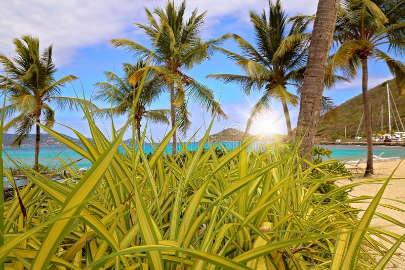 Safirstrand på den St Thomas ön royaltyfri bild