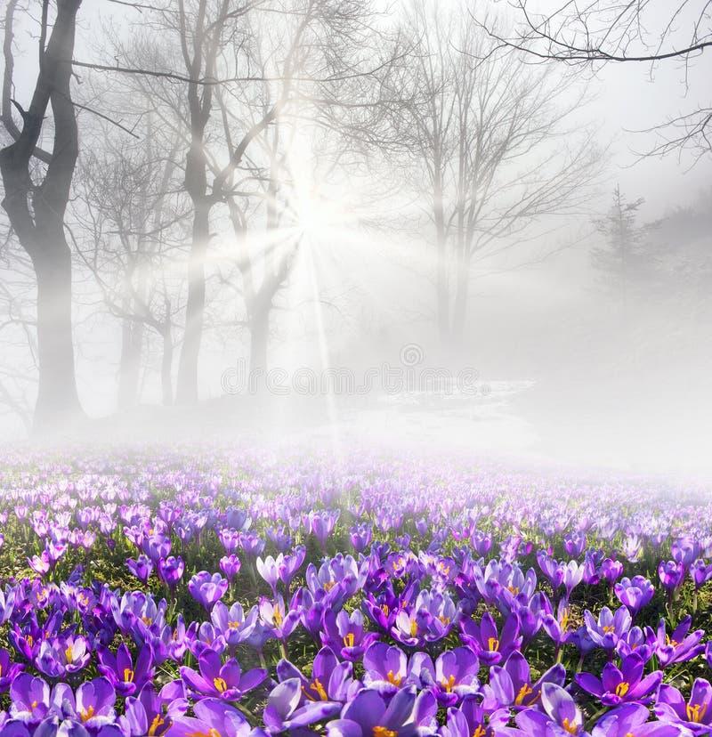 Safran dans le brouillard photo stock