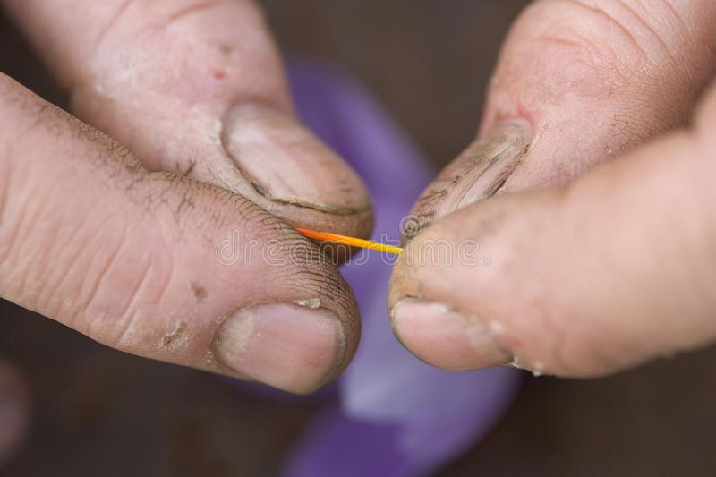 Saffron. Detail and contrast between the hardness of the fingers of the grower and the delicacy of one of the stigmas recently extracted from the saffron flower royalty free stock photography