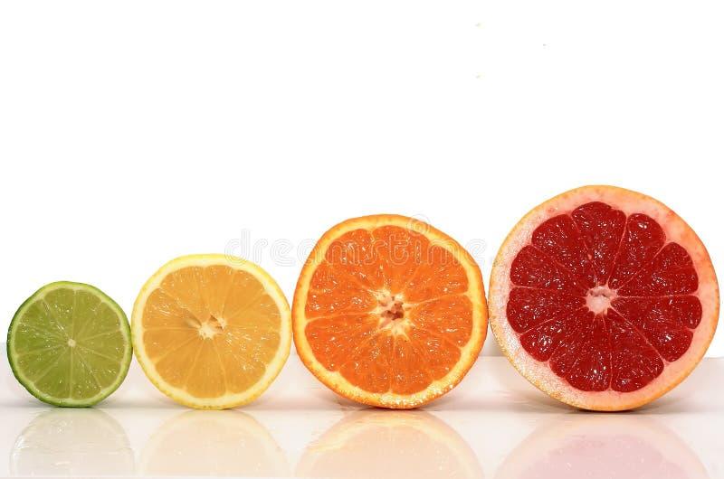 saftig fruktbakgrund från olika skivor av citruns royaltyfria foton